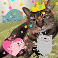 Junsの写真に貼れるカラフル猫スタンプ
