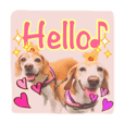 ビーグル犬ロコレイの日常使えるスタンプ2