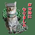 猫写真スタンプ