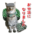 cat communication sticker