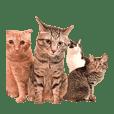 盆子原家の猫たち