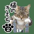 猫のきもち 2