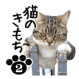 NEKO no kimochi 2 cat