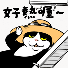 賓士貓Ohagi - 夏日篇