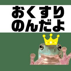 イエアメガエル おくすり編