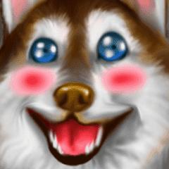 Siberian Love Husky : Pop-Up
