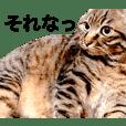 はる となつNo.2