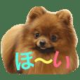 獅と狛  withモコモコ