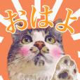 猫のみぃさん