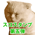 Sticker of Pathetic face Scottish Fold 5