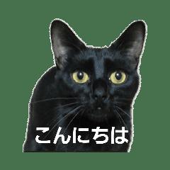 猫の喜怒哀楽