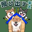 飛び出す柴犬(敬語編)