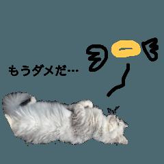 miuneko_20210514120820
