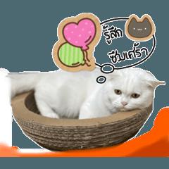 Suchaya_20210515221429