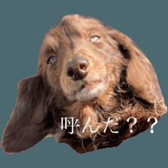 Choco_20210516201827