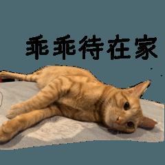 防疫肥宅橘貓