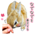 Netherland Dwarf and Lion Rabbit sticker