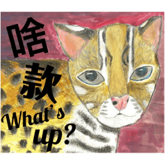 小石虎啥款Leopard Cat, what's up?