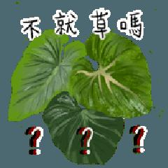 Yo! 植物人