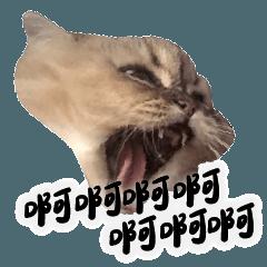 老貓日常 第1波