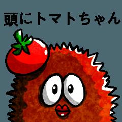 Tomato on the head