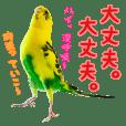 yuzunichi vol.03
