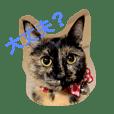 サビ猫サビ柄のサビちゃん