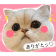 Fluffy Cat MARO Sticker