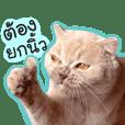 OH MY CAT!2