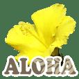 ALOHA-05