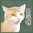 Cat Mimi Daily Life