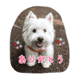 Shion(West Highland White Terrier) 1