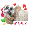 Cute Shihtzu sisters sticker