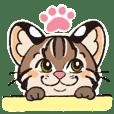Tsushima Leopard Cats