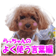 toy poodle LUCK
