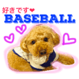 Baseball loves dog Chikuwa