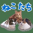 三毛猫りんちゃんと仲間たち