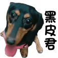 Sausage dog 02