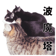 POMOTA The Cats