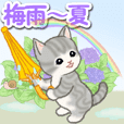 梅雨~夏 もこもこ猫ちゃんズ