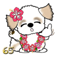 シーズー犬65『ハワイ』
