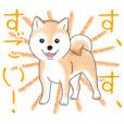 Praise and heal you Love Shiba Inu (dog)