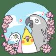 The Romance of Three Birds