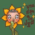 SunSun (Thai Sunflower)