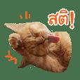 Futoru Cat 2