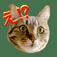 我が家の猫が語る 日常編