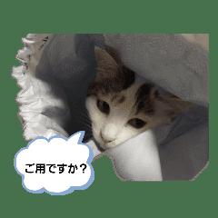 ミケとパンダ猫
