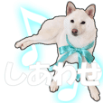 SHIBAINU SHIRO @ Daily use sticker