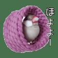 ホヨヨ文鳥