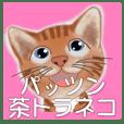 パッツン茶トラ猫の挨拶